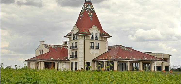 Vinogradi na sjeveru Bačke (2)
