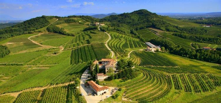 Talijanske vinarije u vinoteci Bornstein