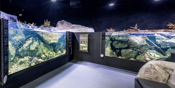 ulaz-u-akvarij-rampa-detalj-1-web