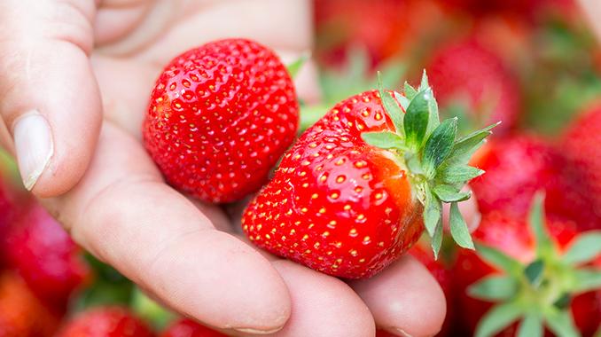 Kaufland nudi domaće: prve jagode iz doline Neretve i
